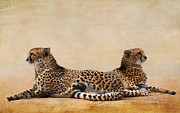 Cheetah Mixed Media Framed Prints - Cheetah Framed Print by Heike Hultsch