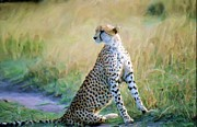 Cheetah Digital Art - Cheetah Looking Right by Russ Considine