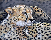 Nature Study Painting Framed Prints - Cheetah Framed Print by Louise Charles-Saarikoski