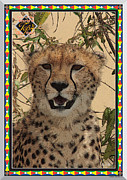Cheetah Digital Art Framed Prints - Cheetah - One Of The Top 4 Big Cats Framed Print by John Hebb