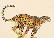 Cheetah Running Framed Prints - Cheetah Painting Framed Print by Lisa Bentley