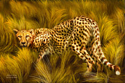 Wild Animal Mixed Media Posters - Cheetah Stare Poster by Carol Cavalaris