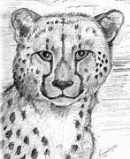 Cheetah Drawings Framed Prints - Cheetah Framed Print by Tricia Griffith