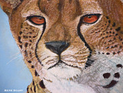 Cheetah Mixed Media Prints - Cheetahs Eyes Print by Rene Boast