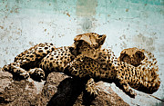 Cheetahs Digital Art Posters - Cheetas in the Serengeti Poster by Amyn Nasser