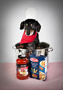 Spaghetti Noodles Prints - Chef Boyardee Doggie Print by Denise Oldridge