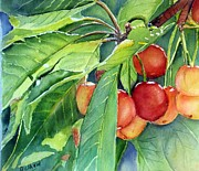 Cherry Art Framed Prints - Cherries Framed Print by Patricia Pushaw