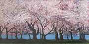 Cherry Blossoms Painting Originals - Cherry Blossom 1 by Suzanne Shelden
