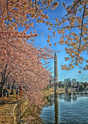 Cherry Blossoms Photo Originals - Cherry Blossom Fun by Boyd Alexander