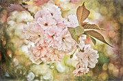 Texturing Posters - Cherry Blossom Poster by Loriental Photography