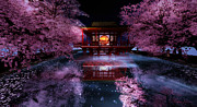 Kylie Sabra Metal Prints - Cherry Blossom Tea House Metal Print by Kylie Sabra