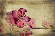 Isolated Digital Art Metal Prints - Cherry Blossom with Textures Metal Print by John Edwards
