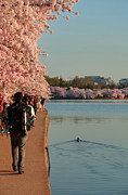 Cloud Posters - Cherry Blossoms 2013 - 008 Poster by Metro DC Photography