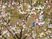 Cherry Blossoms And Blue Birds Print by Blenda Studio