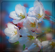 Mikki Cucuzzo Framed Prints - Cherry Blossoms in Bloom Framed Print by Mikki Cucuzzo