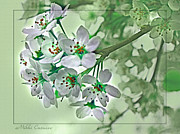 Mikki Cucuzzo Acrylic Prints - Cherry Blossoms in Green Acrylic Print by Mikki Cucuzzo