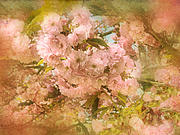 Cherry Blossom Prints - Cherry Blossoms Print by Jessica Jenney