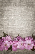 Cherry Blossoms On Linen  Print by Elena Elisseeva