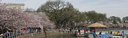 Pano Framed Prints - Cherry Blossoms - Panorama - Washington DC - 01132 Framed Print by DC Photographer