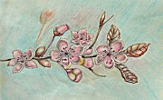 Cherry Blossoms Drawings Posters - Cherry Blossoms Poster by Thuraya R