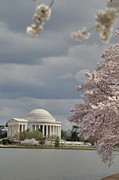 Outside Prints - Cherry Blossoms with Jefferson Memorial - Washington DC - 011310 Print by DC Photographer