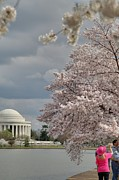 Zen Posters - Cherry Blossoms with Jefferson Memorial - Washington DC - 011311 Poster by DC Photographer