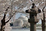 Cherry Prints - Cherry Blossoms with Jefferson Memorial - Washington DC - 011325 Print by DC Photographer