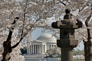 Outside Prints - Cherry Blossoms with Jefferson Memorial - Washington DC - 011327 Print by DC Photographer