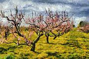 Michelle Calkins - Cherry Trees 3.0