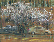 Blooming Drawings Prints - Cherry Trees Print by Donald Maier