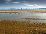 Sandy Point Park Prints - Chesapeake Bay Bridge Print by Brian Wallace