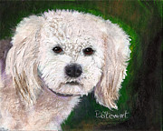 Havanese Paintings - Chester the Fluffy White Dog by Penny Stewart
