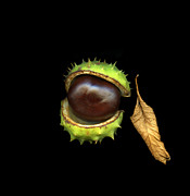 Christian Slanec - Chestnut and Leaf
