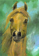 Horse Drawing Framed Prints - Chestnut Arabian Horse Oil Painting Framed Print by Angel  Tarantella