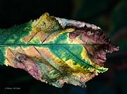 Barbara McMahon - Chestnut Autumn Mosaic