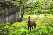 Tennessee Barn Framed Prints - Chestnut Horse in a Sunny Meadow Framed Print by Debra and Dave Vanderlaan