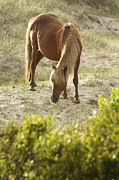 South Carolina Prints - Chestnut Stallion Print by Lyndsey Warren