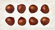 White Background Prints - Chestnuts Print by Danny Smythe