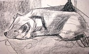 Sleeping Dog Drawings Prints - Chica Print by Anita Dale Livaditis