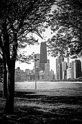 Exterior Prints - Chicago Hancock Building Through Trees in Black and White Print by Paul Velgos
