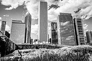 Illinois Flower Prints - Chicago Skyline Lurie Garden Black and White Picture Print by Paul Velgos