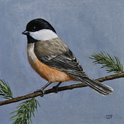 Songbirds Posters - Chickadee Charm Poster by Crista Forest