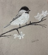Chickadee Drawings Prints - Chickadee  Print by Disha Khinvasara