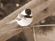 Corinna Garza - Chickadee on a Wire