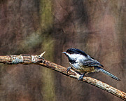 John Crothers - Chickadee painting 2
