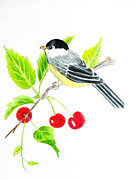 Chickadee Drawings Prints - Chickadee Print by Reta Haube