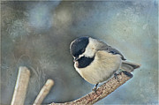 Blank Greeting Cards Prints - Chickadee with texture Print by Debbie Portwood