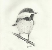 Chickadee Drawings Prints - Chickadee#2 Print by Christopher Hughes