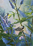 Chickadee Drawings Prints - Chickadees and Lilac Print by Michael Ashmen