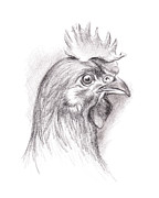 Rooster Drawings Acrylic Prints - Chicken Portrait in Charcoal Acrylic Print by MM Anderson